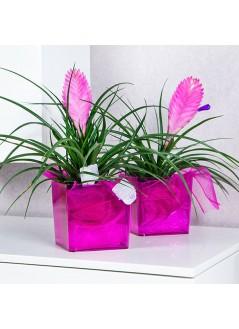 Кашпа за орхидея куб розов