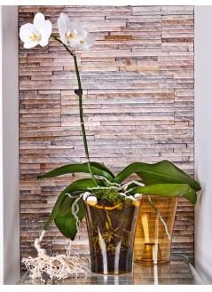 Кашпа за орхидея квадрат 12см Медено жълт