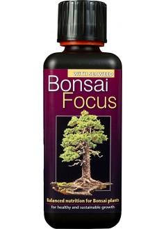 FOCUS Тор за Бонсаи