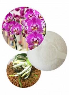 СУПЕР ЦЕНА! Янтарна киселина за цветя на прах